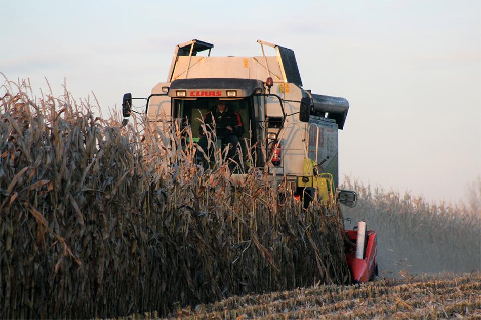 Maispflanzen dreschen von Agrarservice Meyer