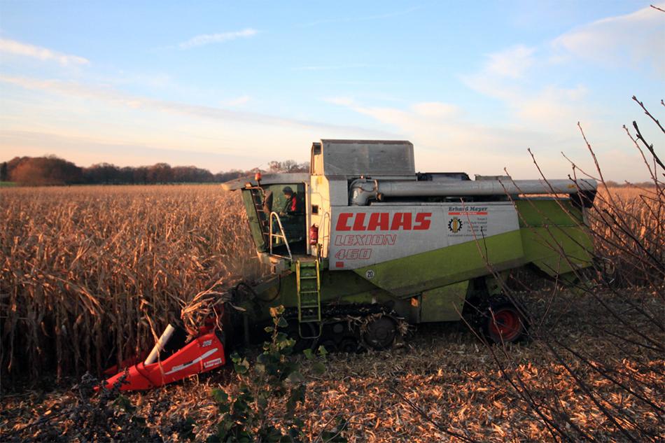 Maispflanzen dresche von Agrarservice Meyer